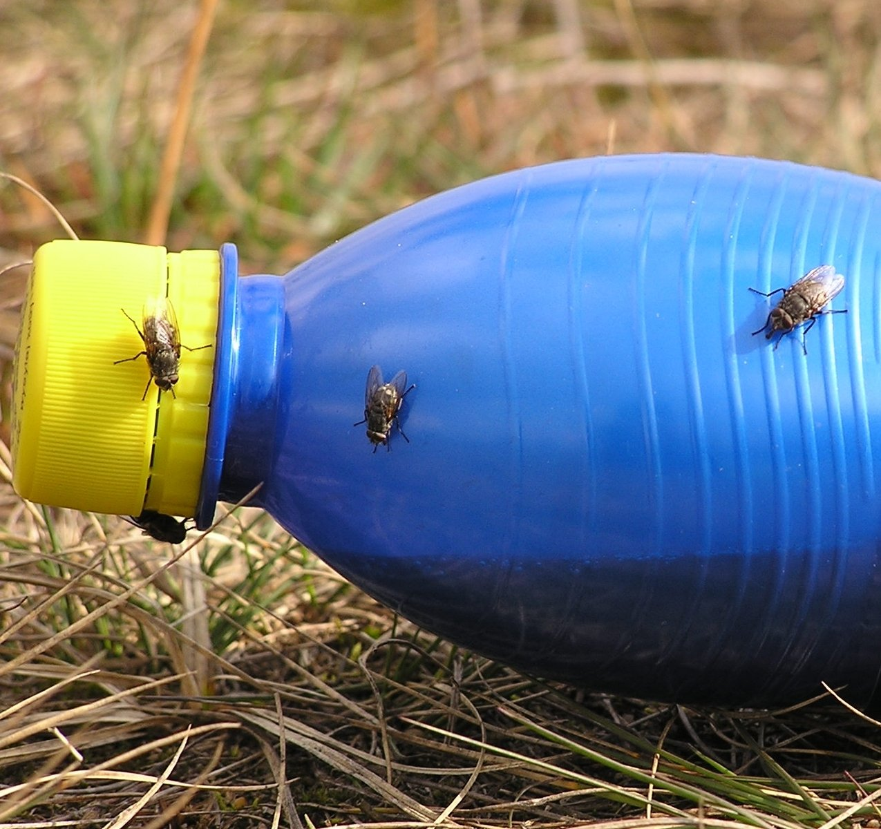 Some flies on a bottle-